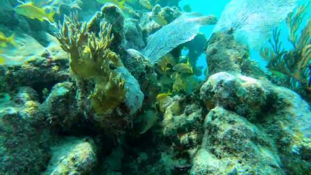 COTUO/驰图 运动相机 水下深潜视频