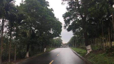 海南槟榔树真漂亮
