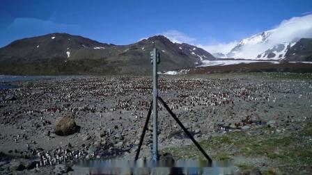 10 企鹅观察项目