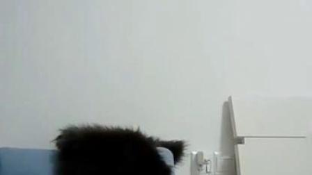 【生活】蓝色沙发