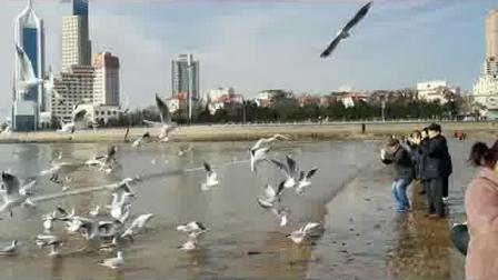 青岛六浴栈桥西侧看海鸥