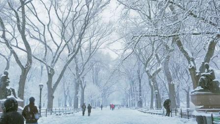 Spring snowstorm blankets Central Park. New York City. 4k G85 ASMR