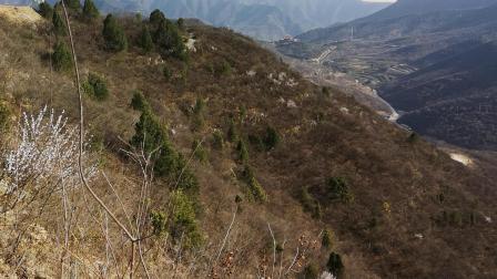 CCTV牛恩发现之旅:兴建中的祈福寺攀山梯(壮观奇景)。