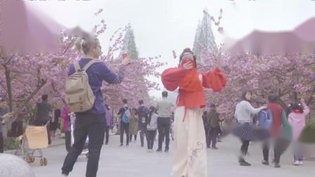 神秘美女樱花树下的_红昭愿__你能猜中这是谁吗
