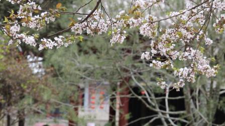 踏青赏花——太原碑林公园