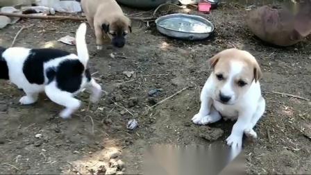 觅谱一露生命篇 56 好玩的3只小狗狗
