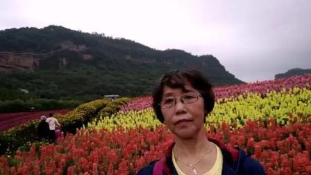 """2019年4月泸州""""花田酒地、七彩玻璃栈道""""一日游"""