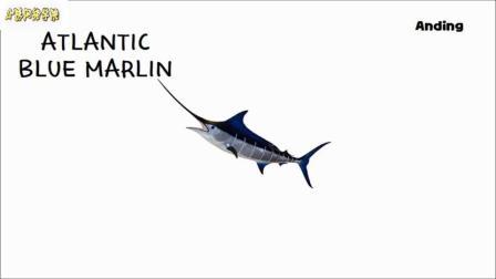海洋捕食者图片游戏