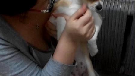 丹东视频~给狗狗剪指甲