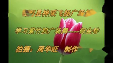 松阳县神采飞扬广场舞:郁金香