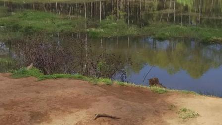 这个叫做情人湖。