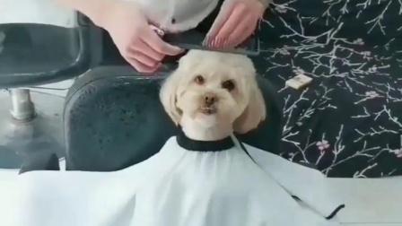 来,宝贝,该理发了😂