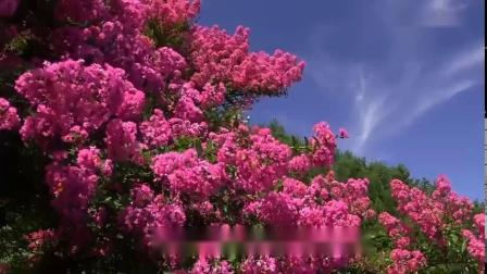 《春光美》