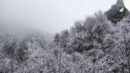 陕西佛坪国家级自然保护区宣传片