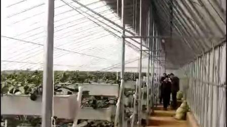 新型PVC草莓槽 草莓立体种植架 产量可提高4倍