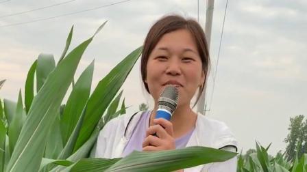 农村媳妇演唱动人歌曲,非常好听,可以去参加节目了