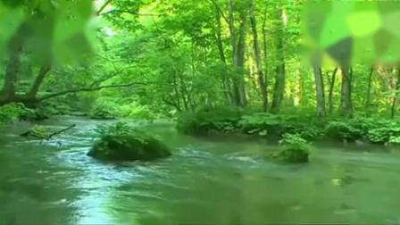 古筝演奏《云水禅心》:暂别喧嚣静心听听这潺潺流水的声音吧