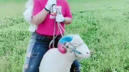 美女骑马 (11)