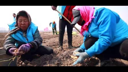 久洲集团黄精基地种植航拍视频