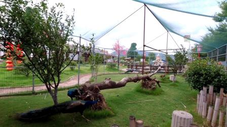 《钓鱼亭生态园》的葡萄熟了。