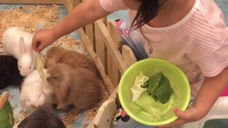 彭羽娍喂一群兔兔