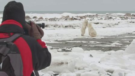 Churchill Wild Polar Bear Photo Safari(邱吉尔野生北极熊照片)