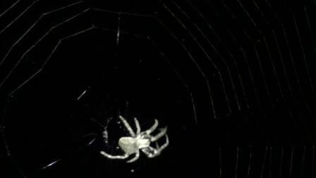 蜘蛛的智慧