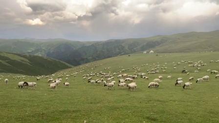 遍地牛羊的巴音布鲁克