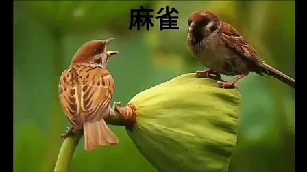 《鸟语》一