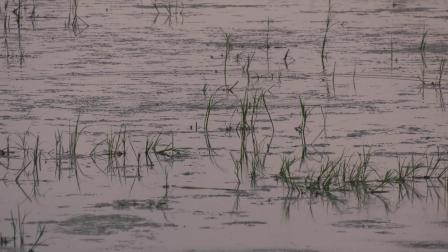 渔猎路亚雷强视频 草区吸口中鱼