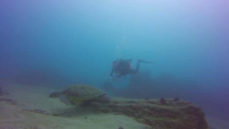 # Fundive垦丁# 大海龟