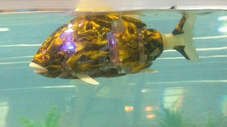 南京科技馆  机器鱼