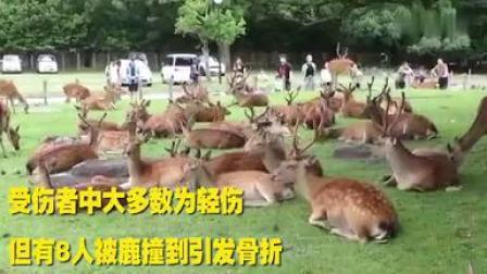 奈良鹿咬人创新高,5年增加3倍!中国伤者最多