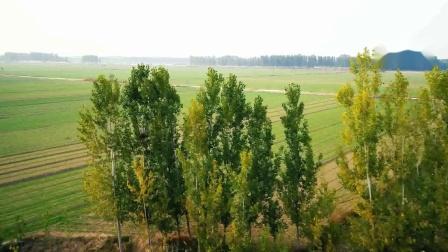 九天乐队的《秋》,好听的歌,配上秋天的金黄树叶,很搭!