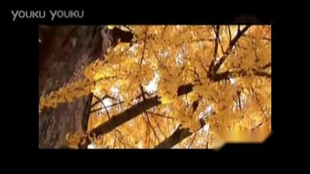 乳香飘(视频伴奏)_高清