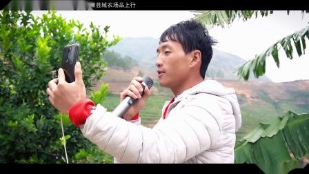 电商助推农产品·柠檬【天顺影视】