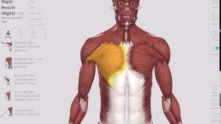 3D立体解剖学——胸大肌