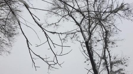 雾凇岛的江边雪景