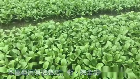 蔬菜园-1