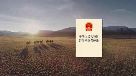 公益广告《保护野生动物篇》超长版