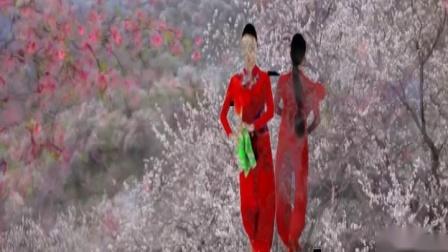 桃花红杏花白视频抠图合成
