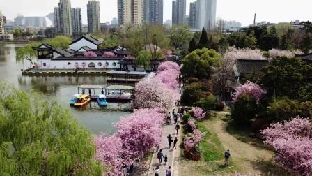 莫愁湖的春天(航拍 帅建军)