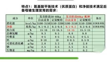 后备母猪 产品特点 和市场价值.mp4