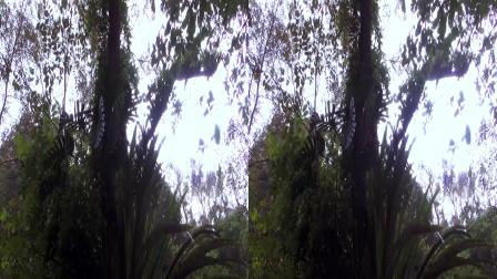 《桂林印象之古东瀑布》3D版