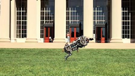 8个高级动物机器人