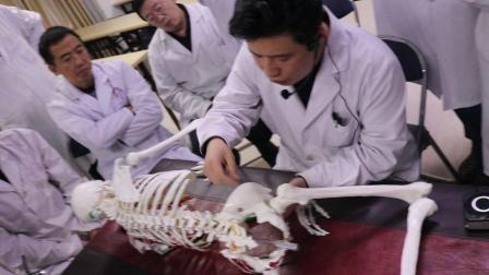 内热针大课堂第九十八期:荣贺内热针治疗臀部视频一.MP4