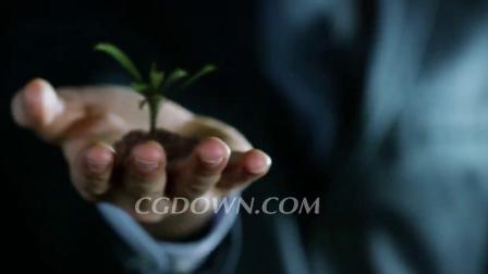 年轻的植物生长在有银行或保险经纪人的手中视频素材