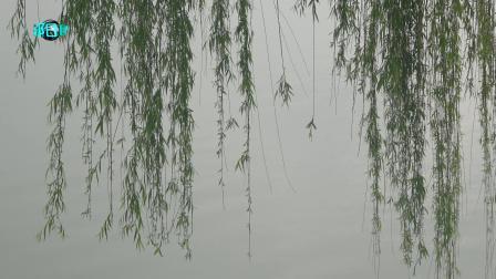 音画欣赏 散步览景两全其美 林翔摄制