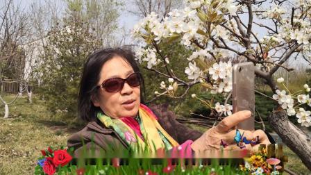 《我在春天等你》演唱:杨钰莹【2020年春天】