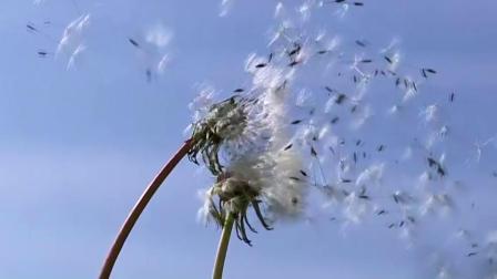 龙卷风---带您感受大自然的威力.mp4
